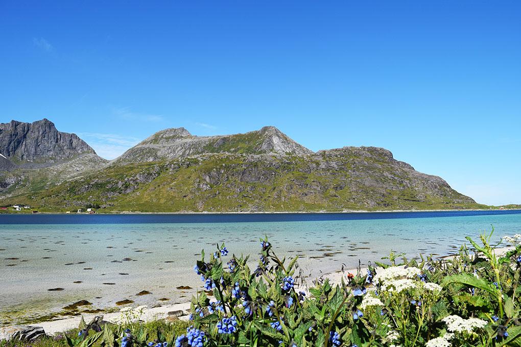 Karibik-Feeling auf den Lofoten